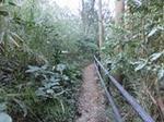 渓流への道1.JPG