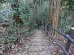 渓流への道3.JPG